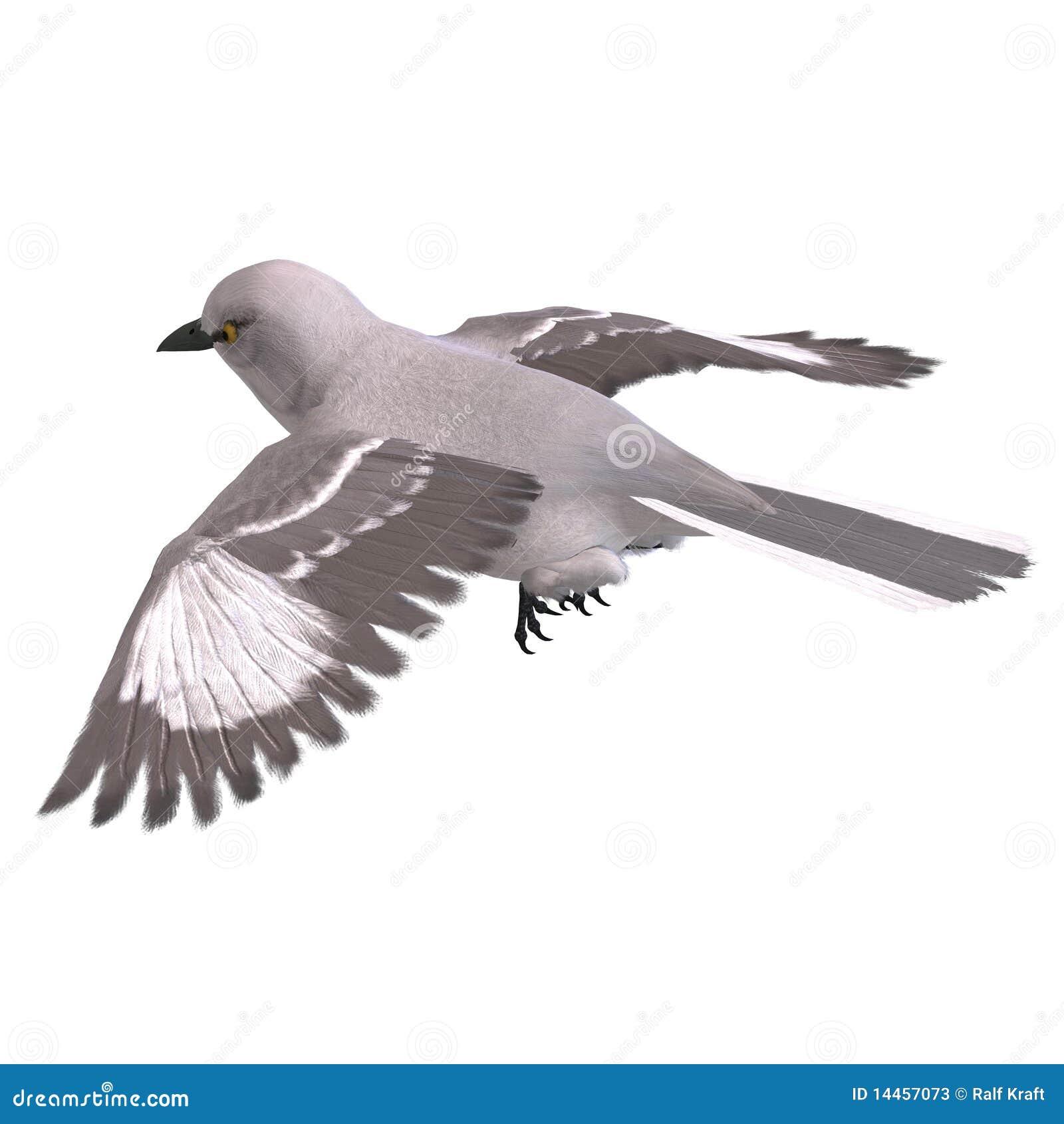 Framförande för härmfågel för clipping 3d nordligt