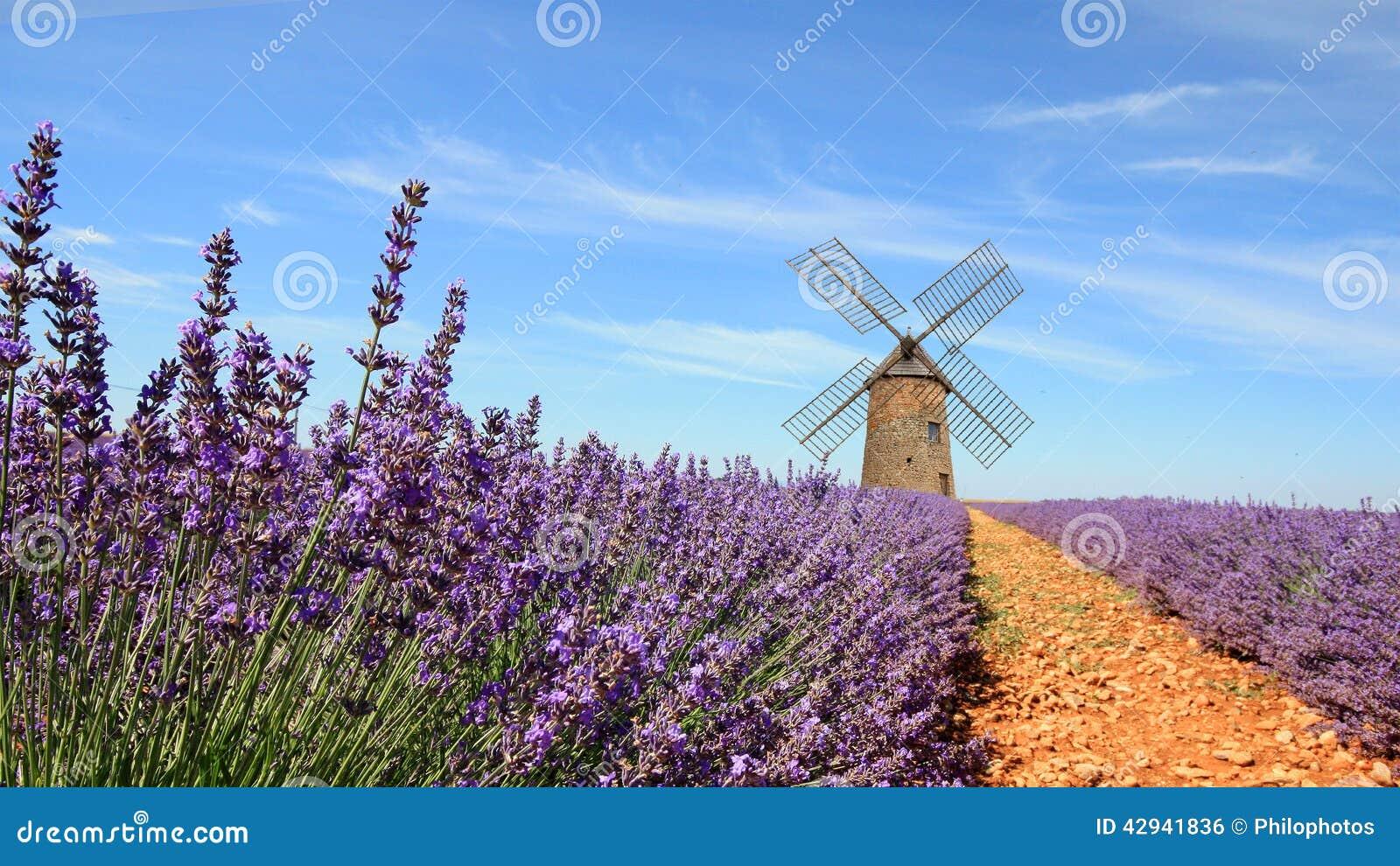 France Valensole Lavandes Stock Photo Image 42941836