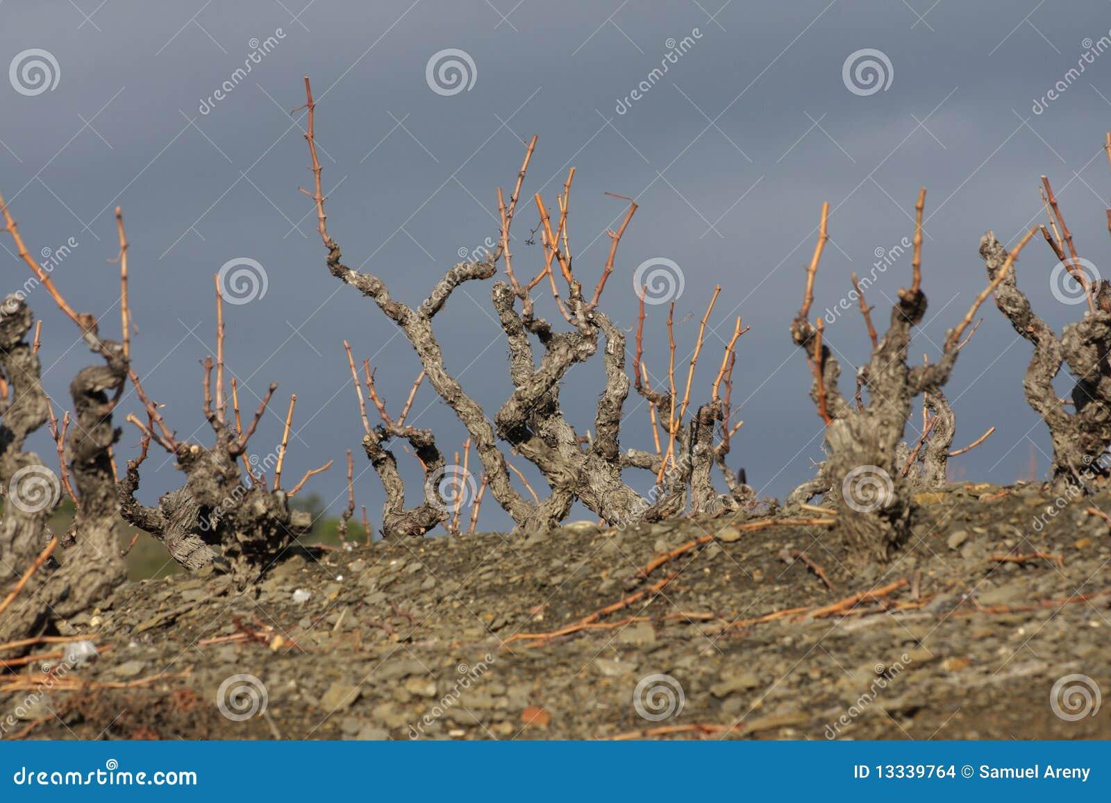 France winograd