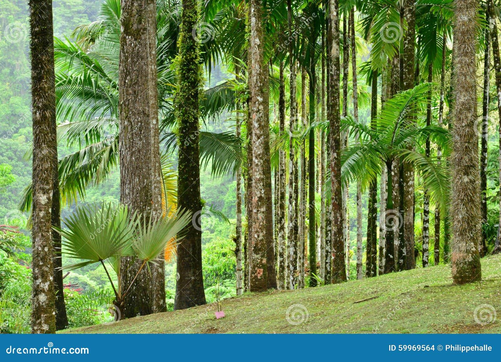 Frances, le jardin pittoresque du balata Martinique