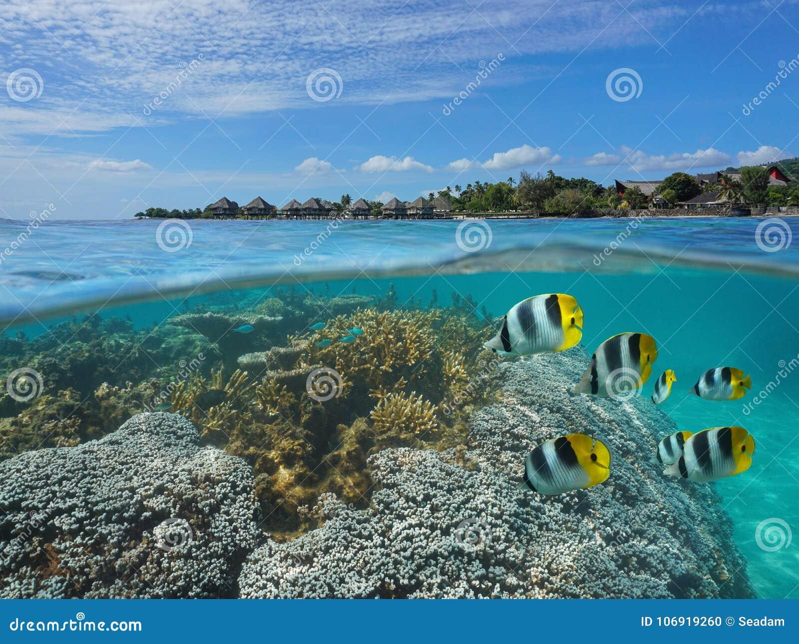 Francuskiego Polynesia Tahiti ryba z kurortem i koral