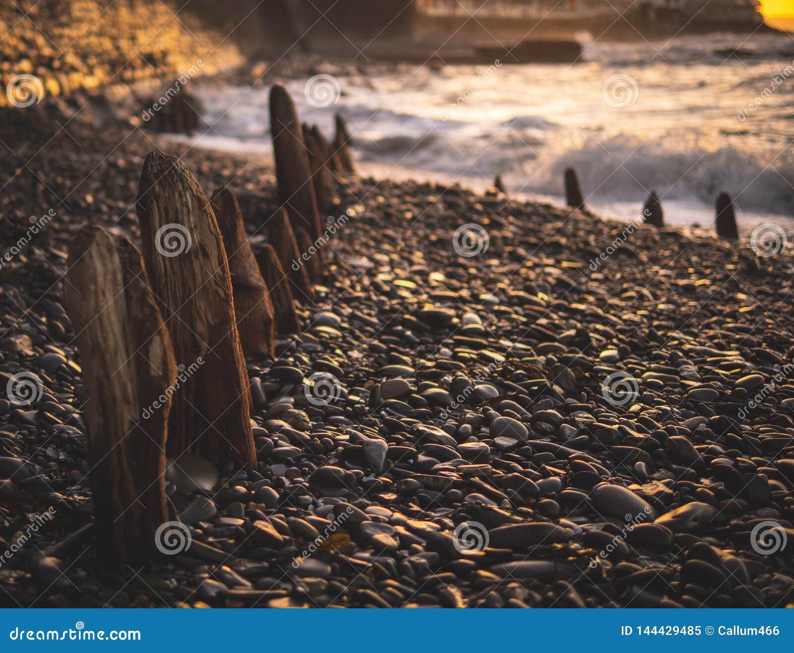 Frangiflutti del legname sepolto in ciottoli su una spiaggia britannica