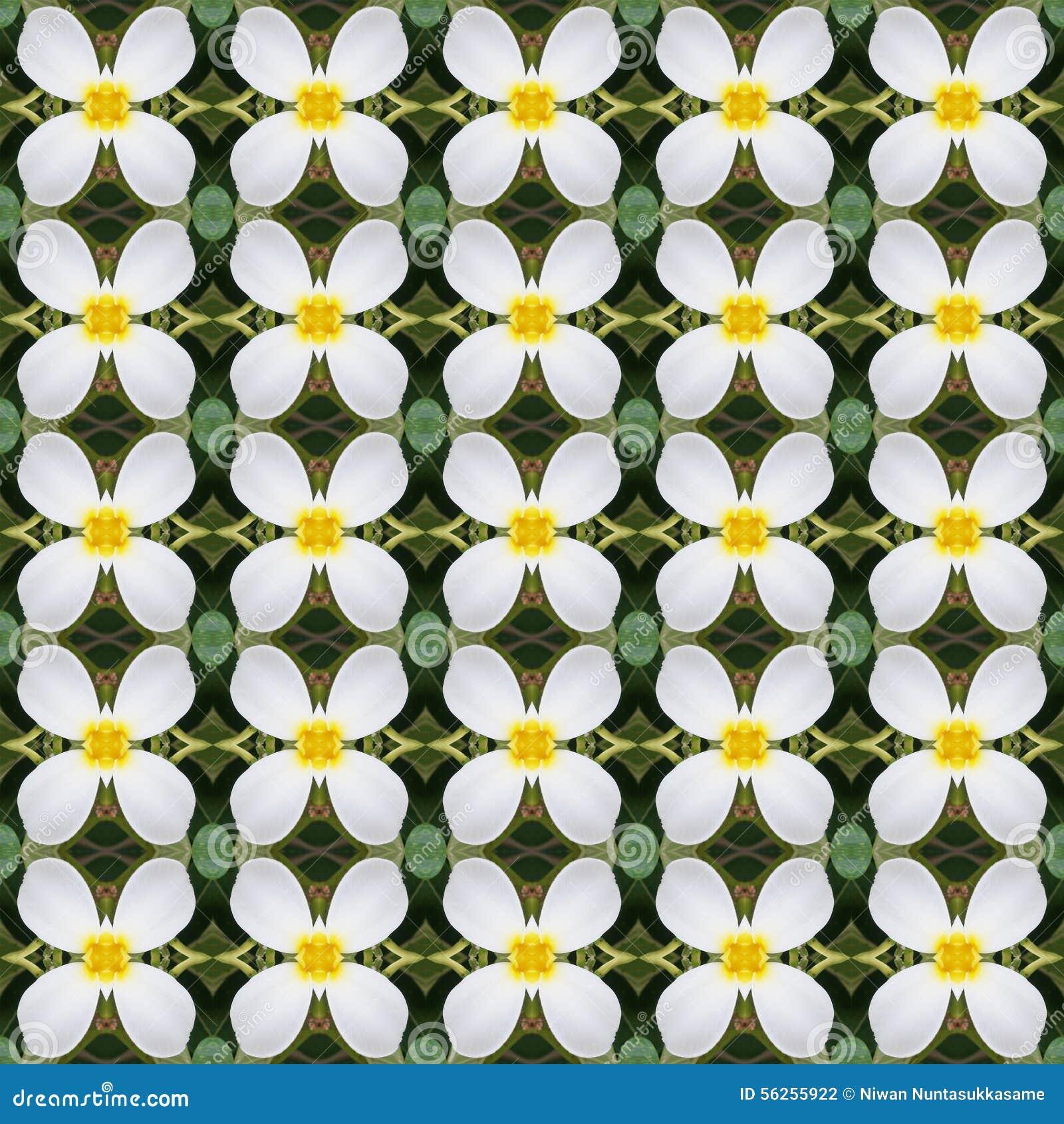 Frangipani blüht, ein Blumenstrauß von den nahtlosen Blumen