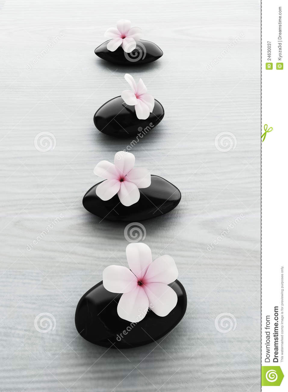frangipani flower on black stone zen spa