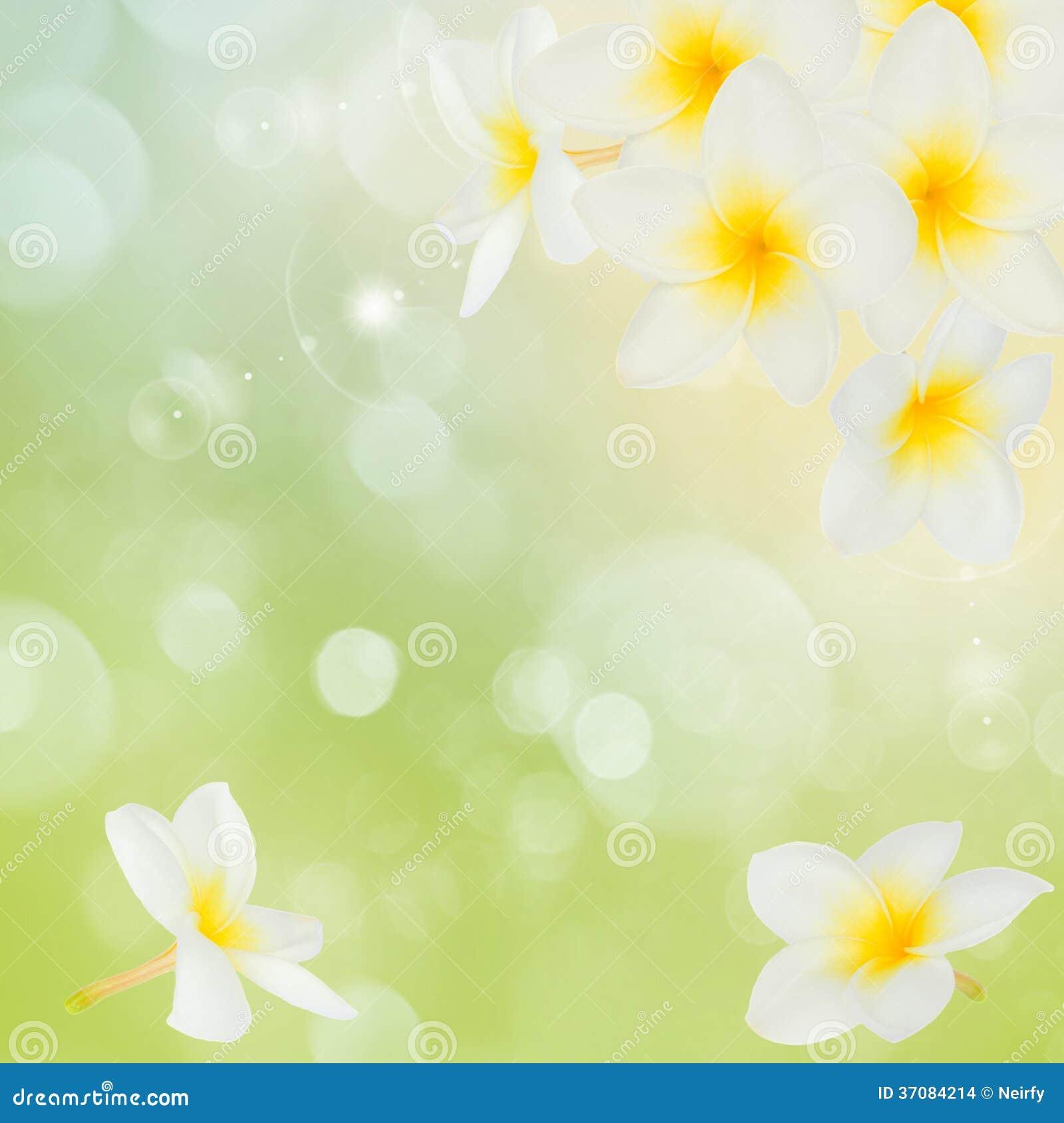 Download Frangipani kwiatów rama zdjęcie stock. Obraz złożonej z aloha - 37084214