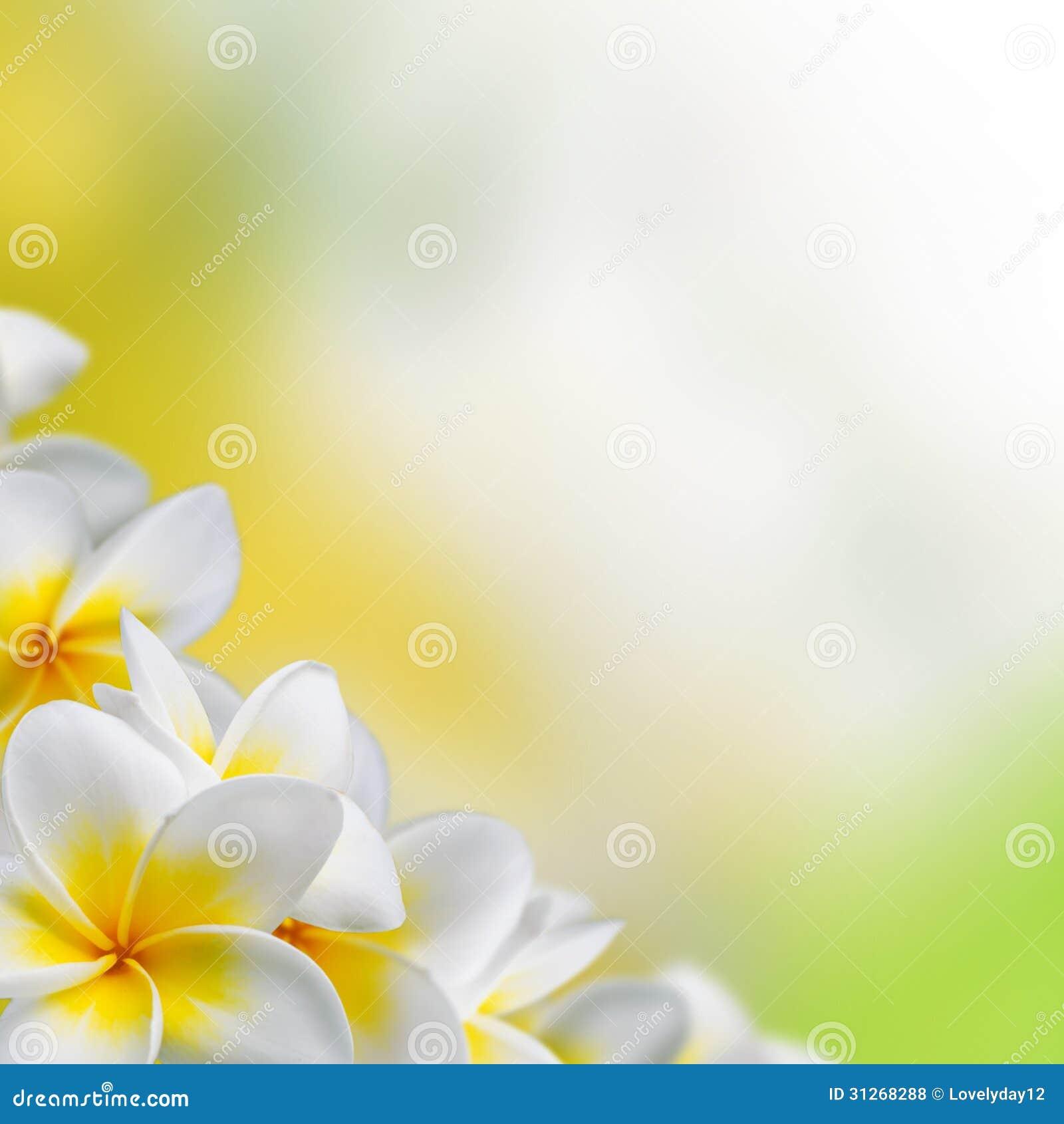 Frangipani Plumeria Flowers Border Royalty Free Stock ...