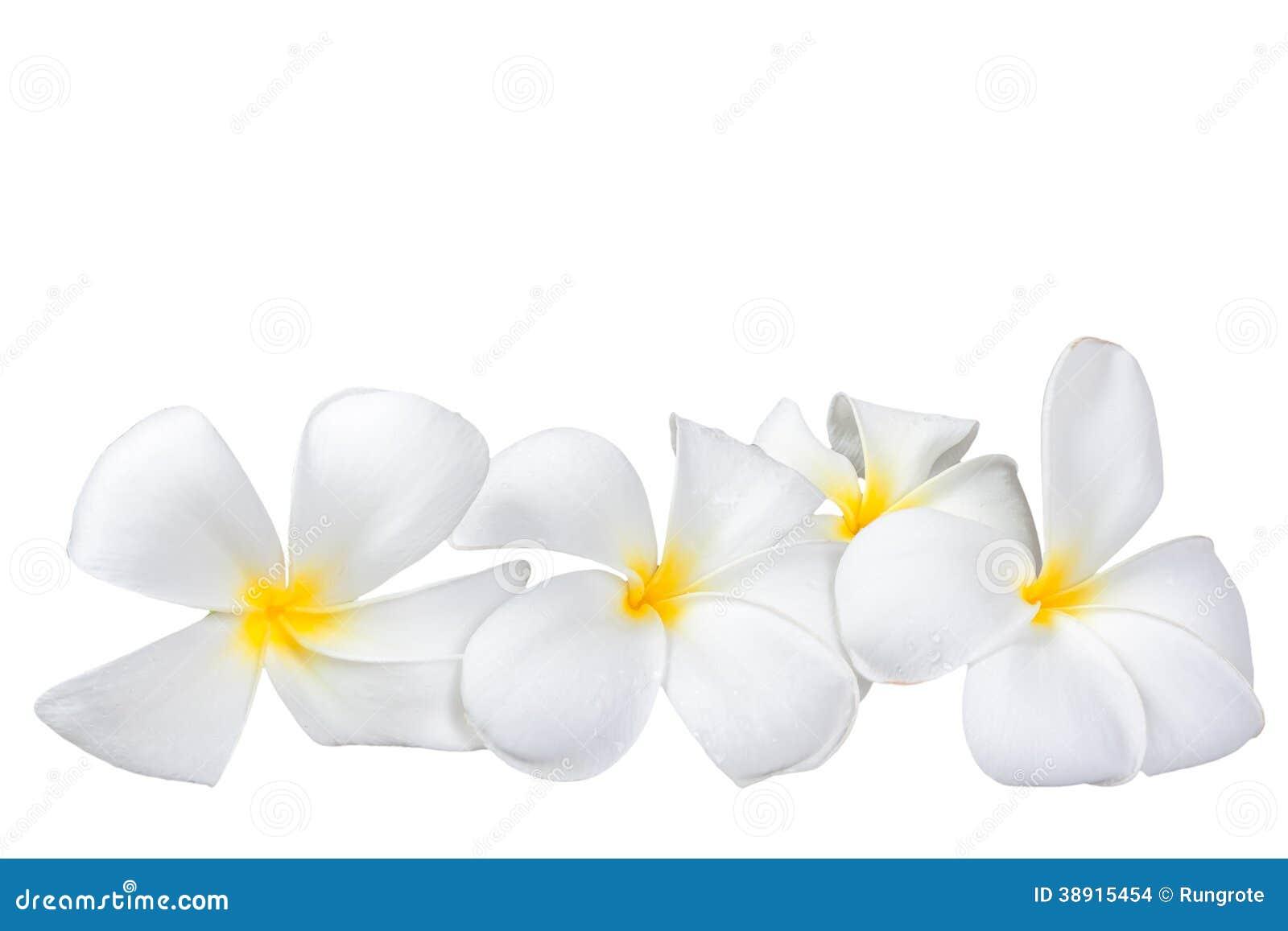 Frangipani spa flowers stock photo image 14654190 - Frangipani Plumeria Spa Flower Stock Photo