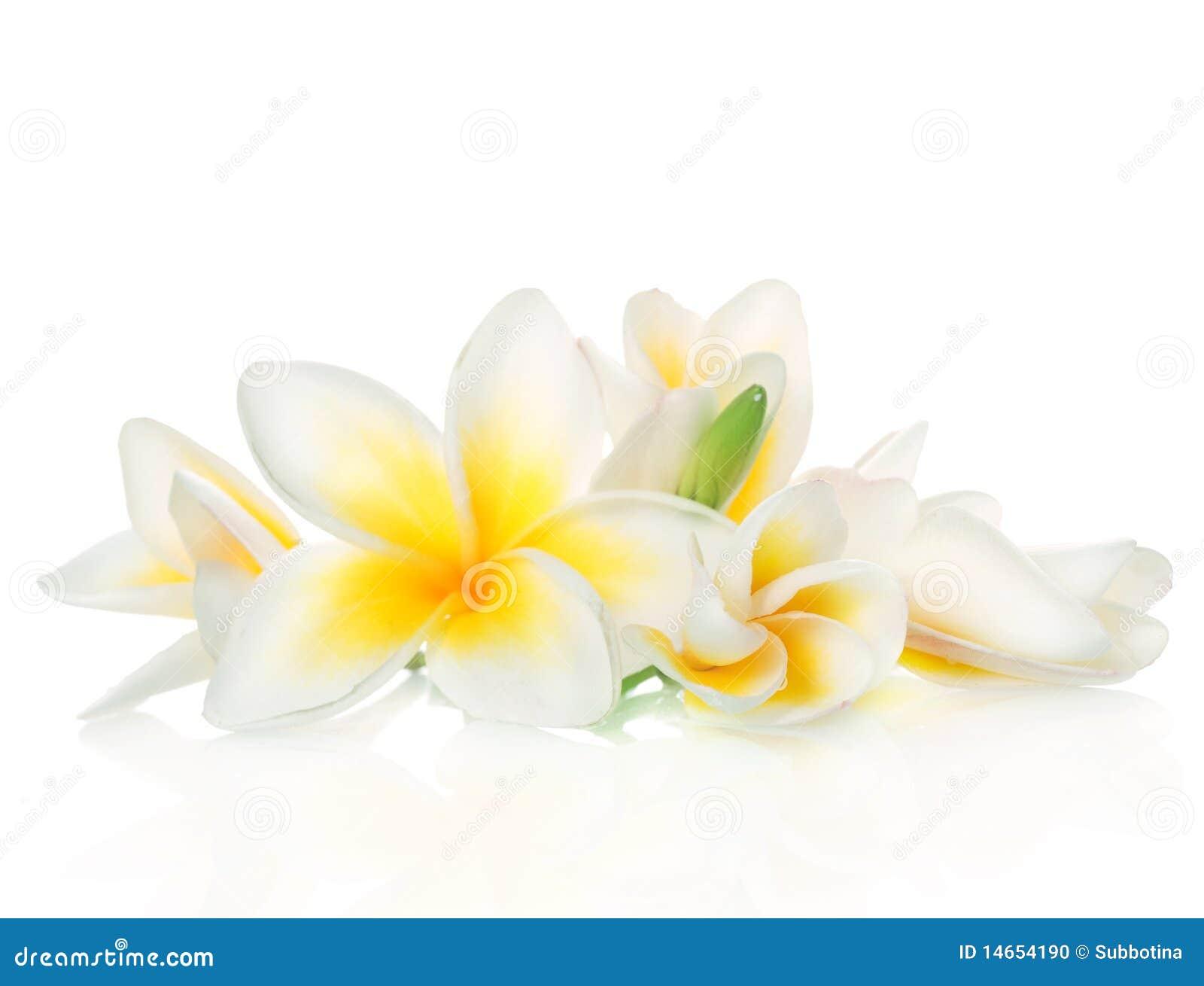 Frangipani Spa Bloemen