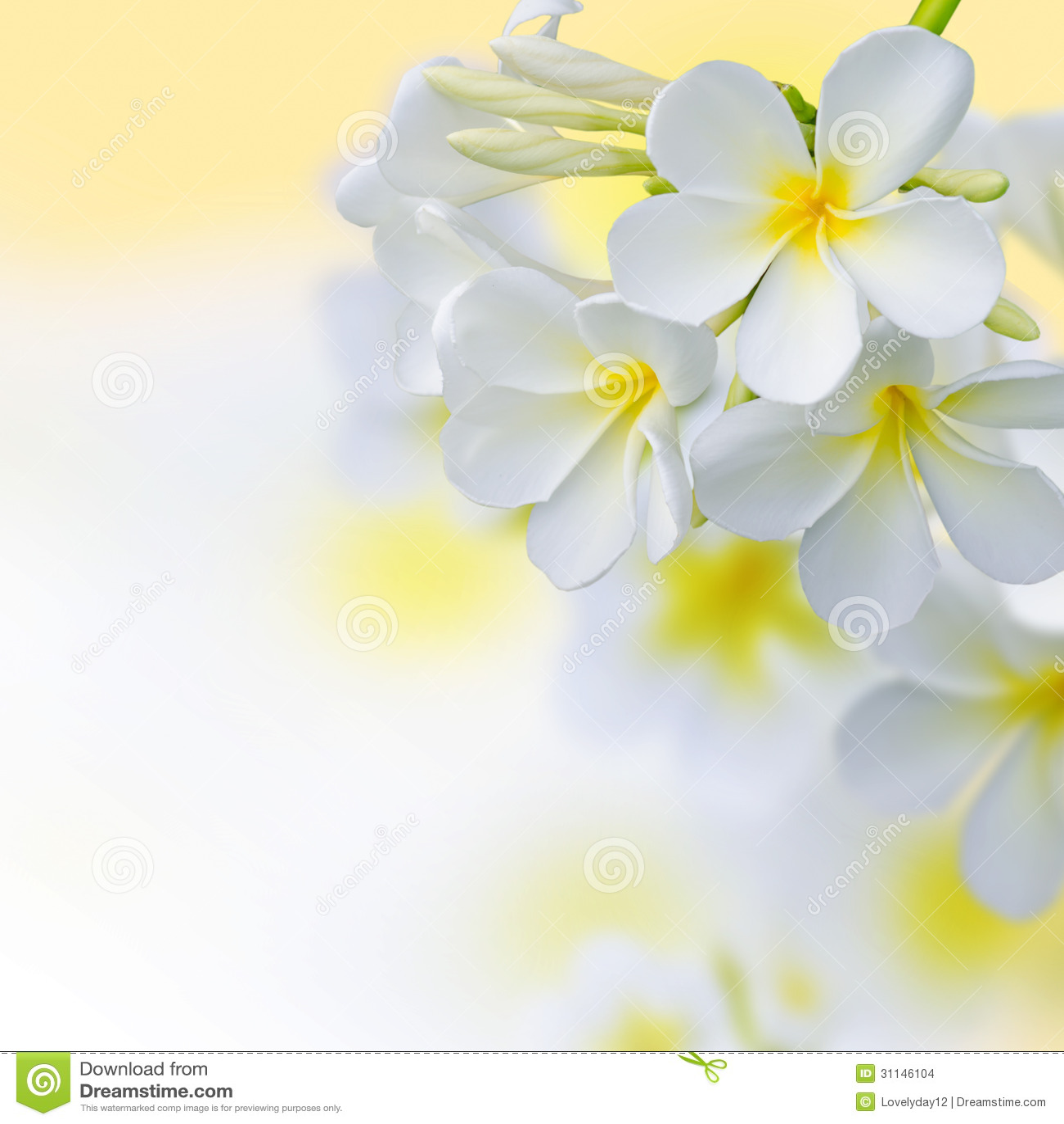 Tropical Flowers Frangipani (plumeria) Black And White Stock Photo - Image  of hawaiian, nature: 45027954
