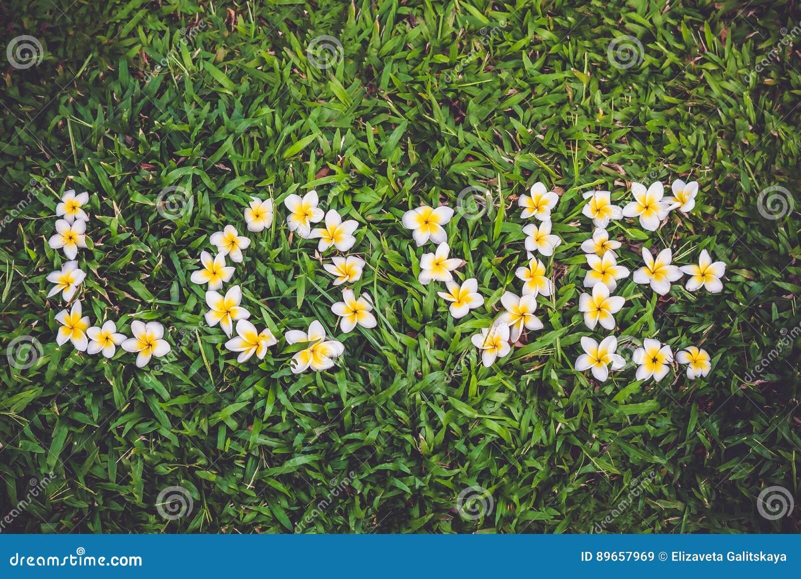 Frangipaniblumenanordnung als die Wortliebe auf dem grünen Gras