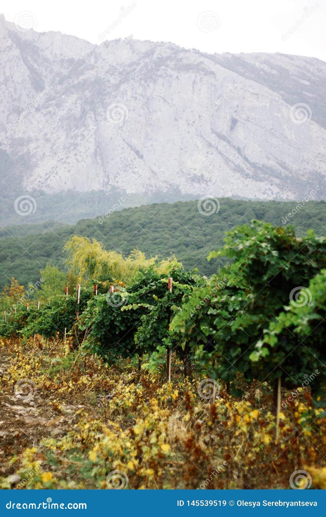 Franschhoek vineyards and highlands of Crimea
