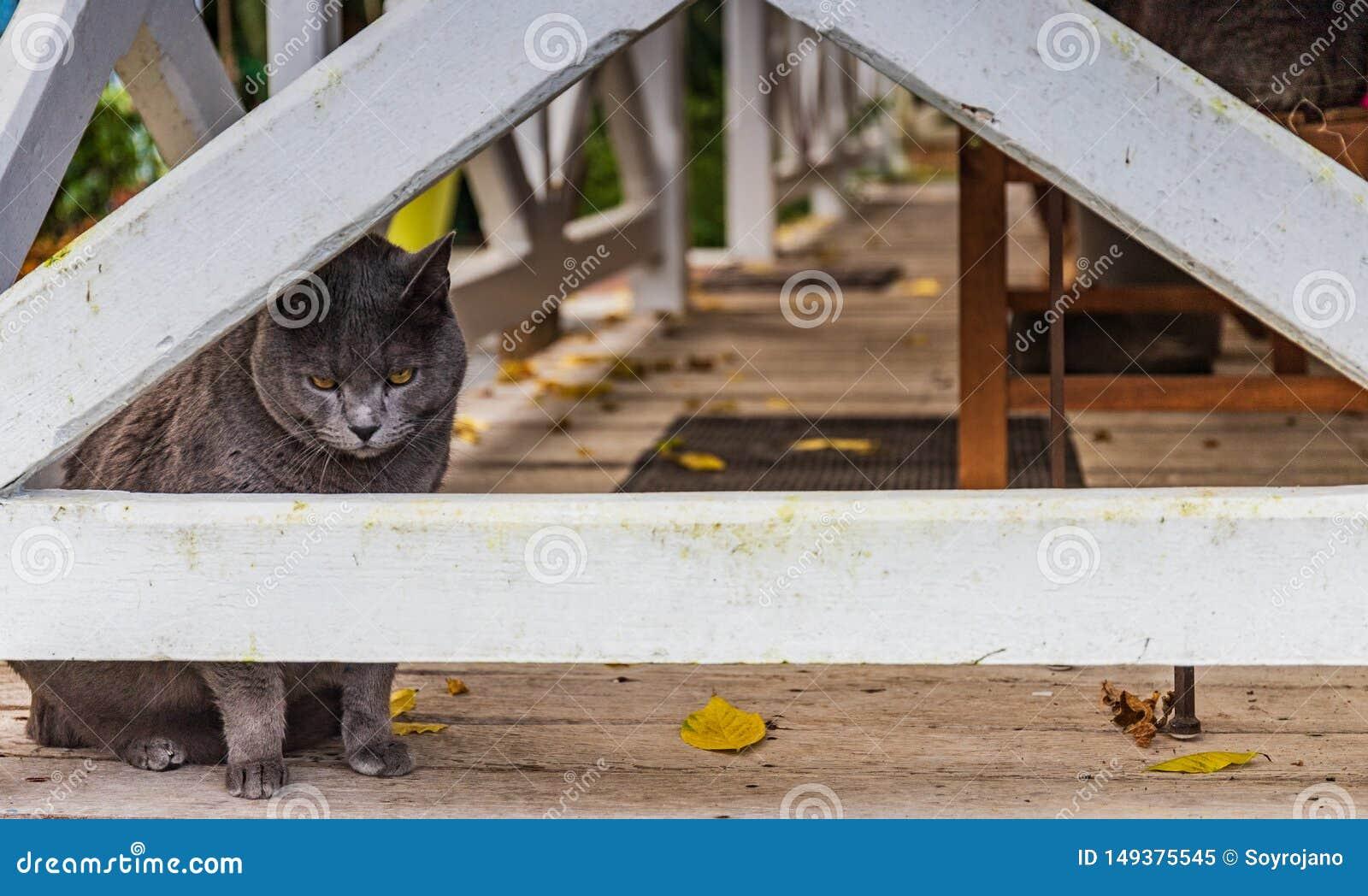 Fransk katt till och med staketet