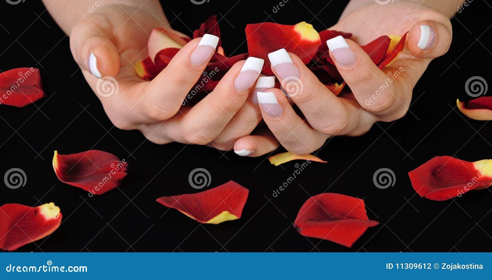 Französische Maniküre und rosafarbene Blumenblätter
