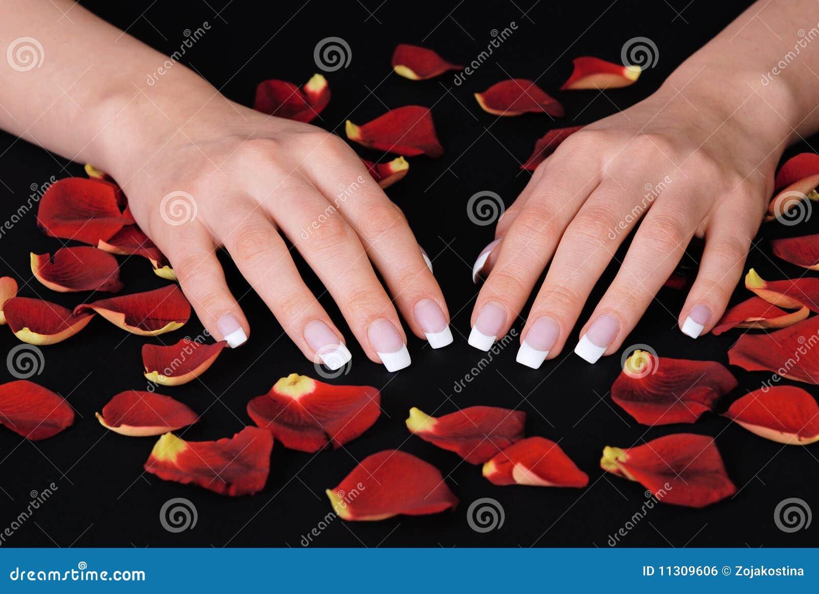 Französische Maniküre und rote rosafarbene Blumenblätter