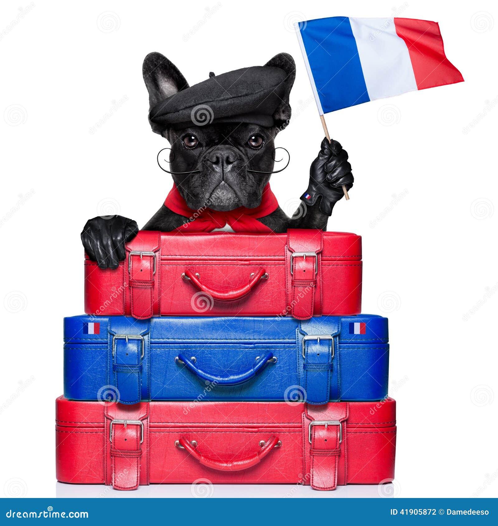 Französischer Hund