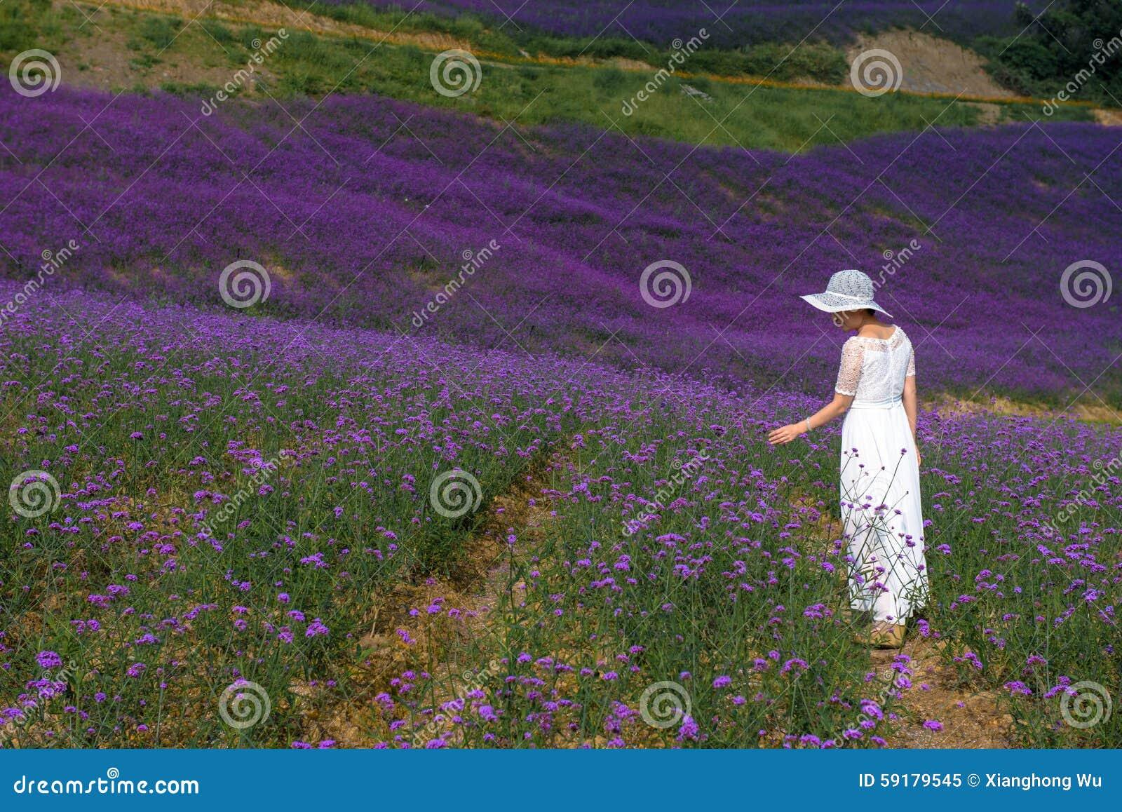 Frau auf dem Lavendelgebiet
