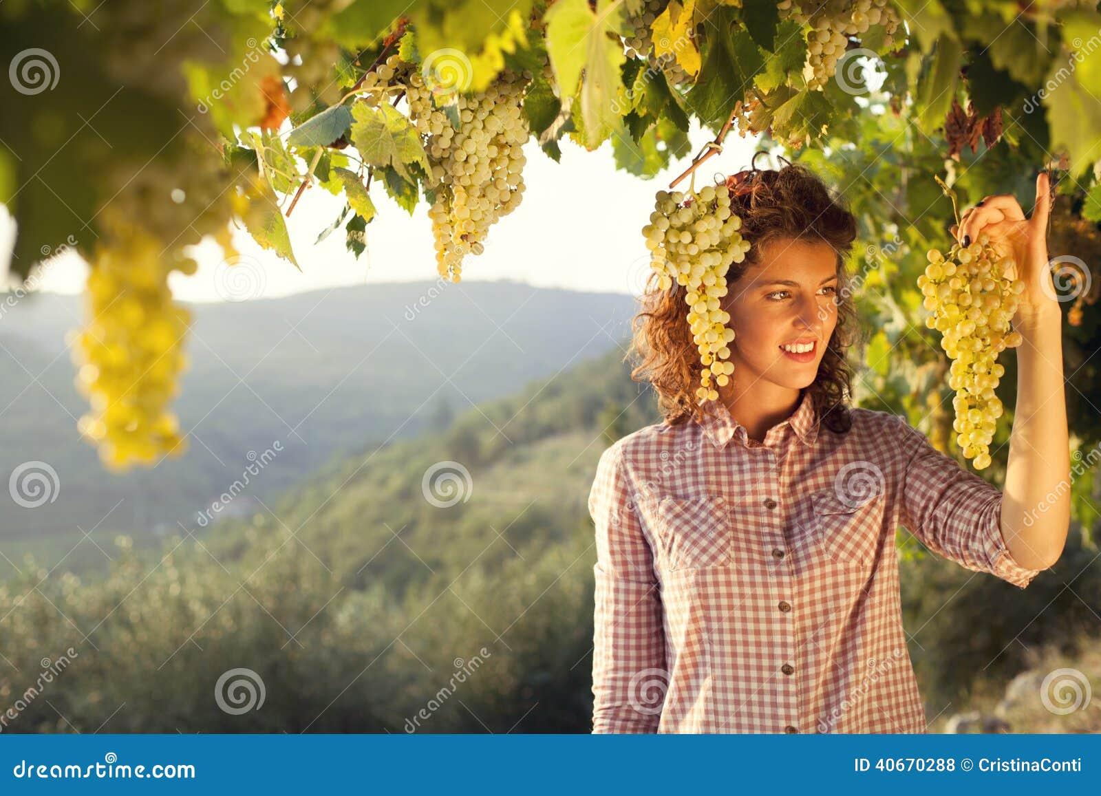 Frau, die Trauben unter Sonnenunterganglicht in einem Weinberg erntet