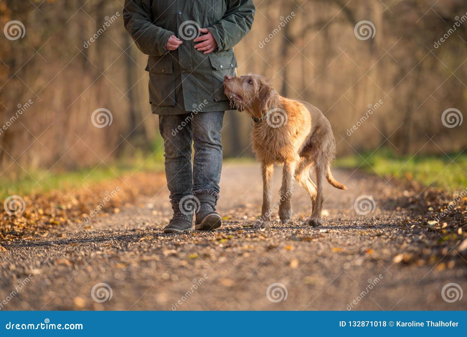 Frau geht in einen Herbstwald mit ihrem ungarischen vizla Hund
