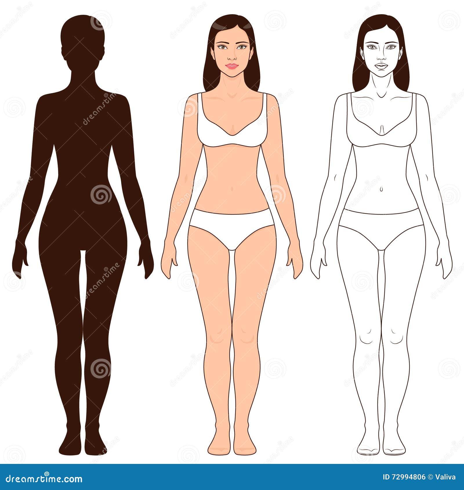 Frauen-Körper-Form Und Schattenbild-Schablone Vektor Abbildung ...