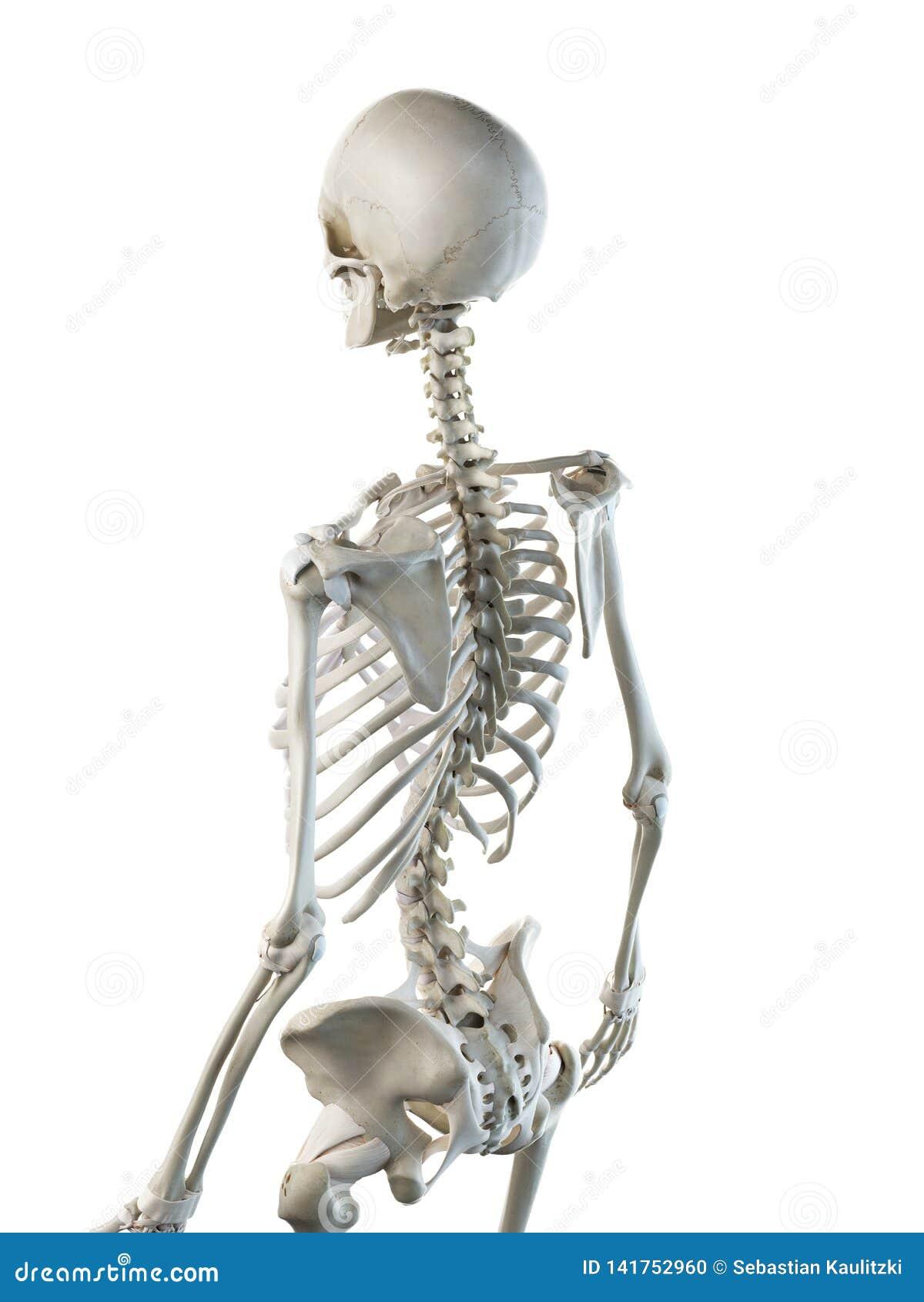 Frauen skelettartig zurück