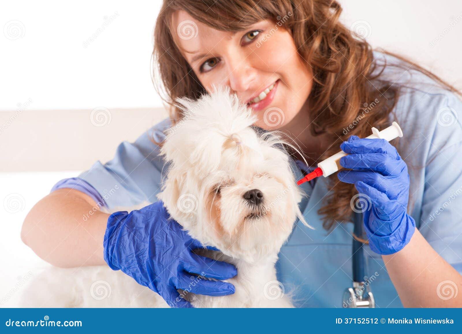 Frauentierarzt, der einen Hund hält