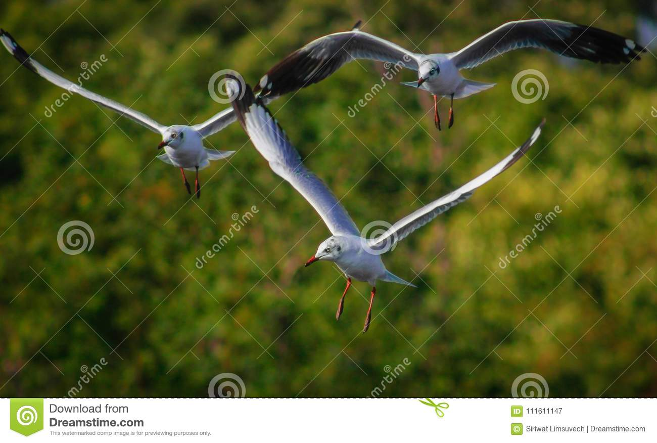 Free Bird And Freedom Life Over The Ocean Stock Image
