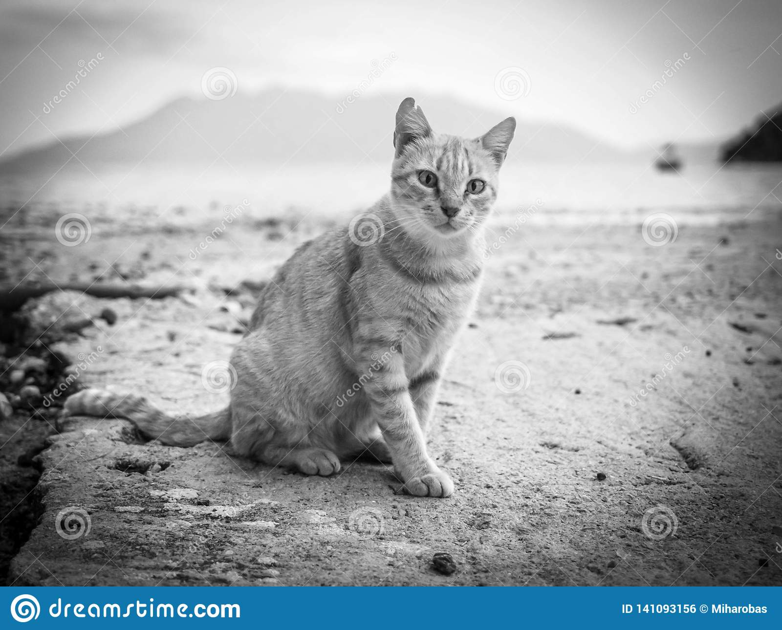Orange cat walking on the beach in Greece black and white pictures