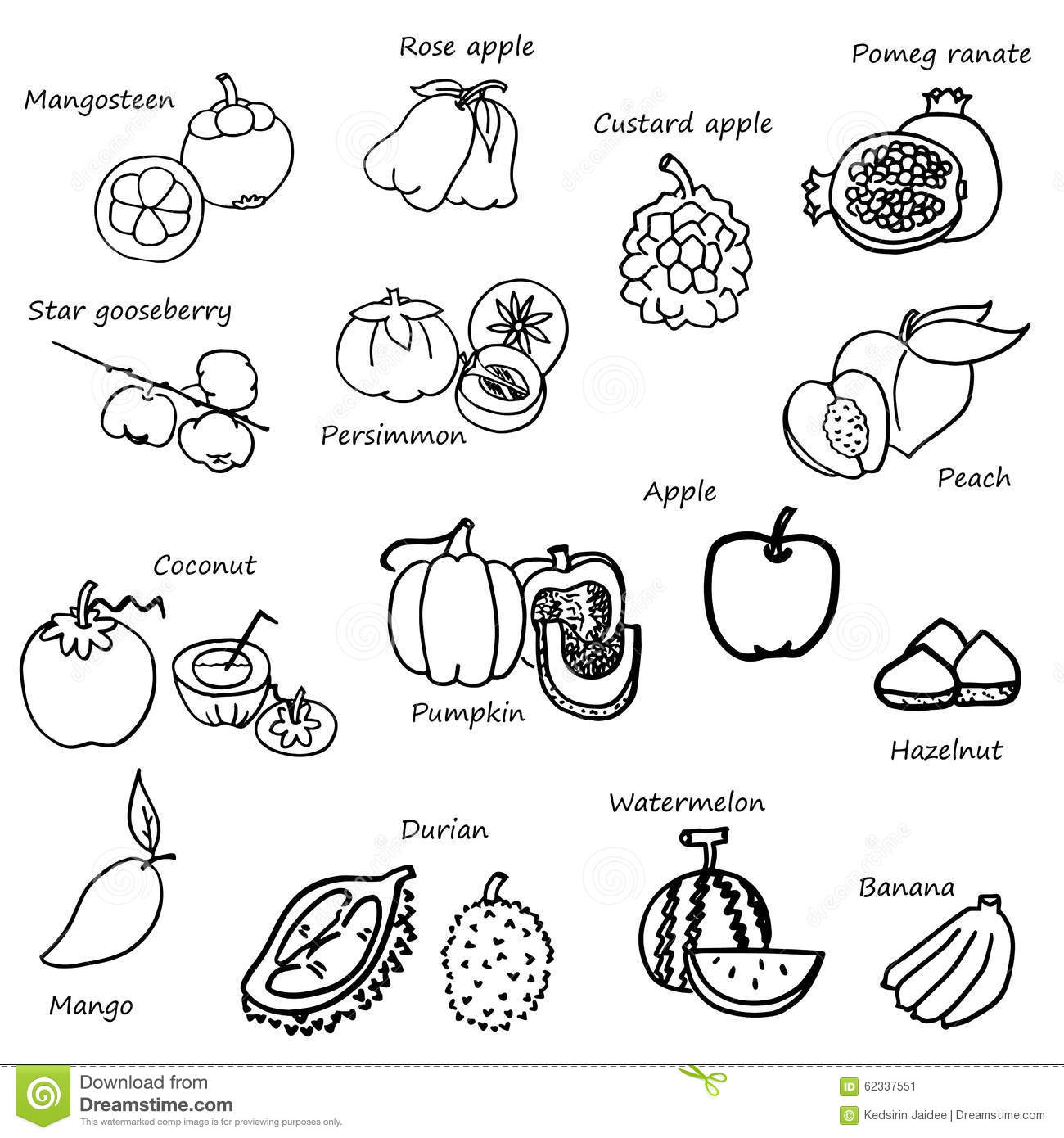 free hand drawing of fruit and vegetables vector on white