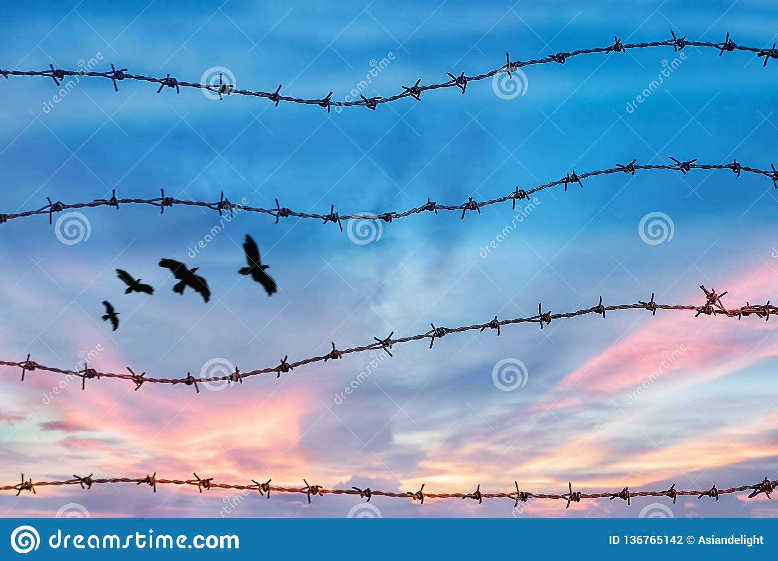Freedom and human rights concept. silhouette of free bird flying in the sky behind barbed wire with sunset background