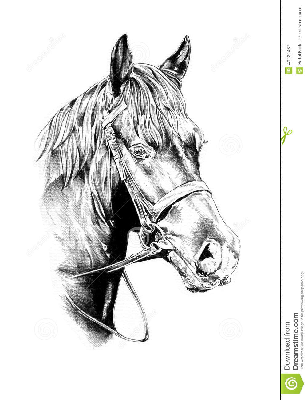Freehand Horse Head Pencil Drawing Stock Illustration