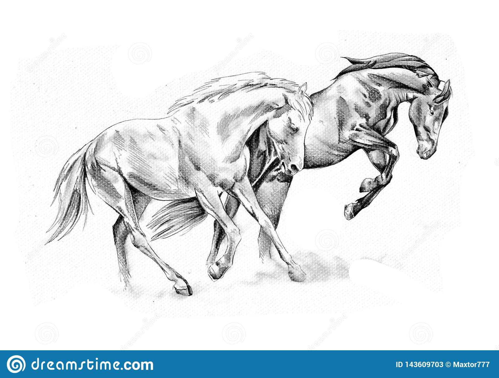 Freehand Horse Head Pencil Drawing Stock Illustration Illustration Of Painting Graphic 143609703