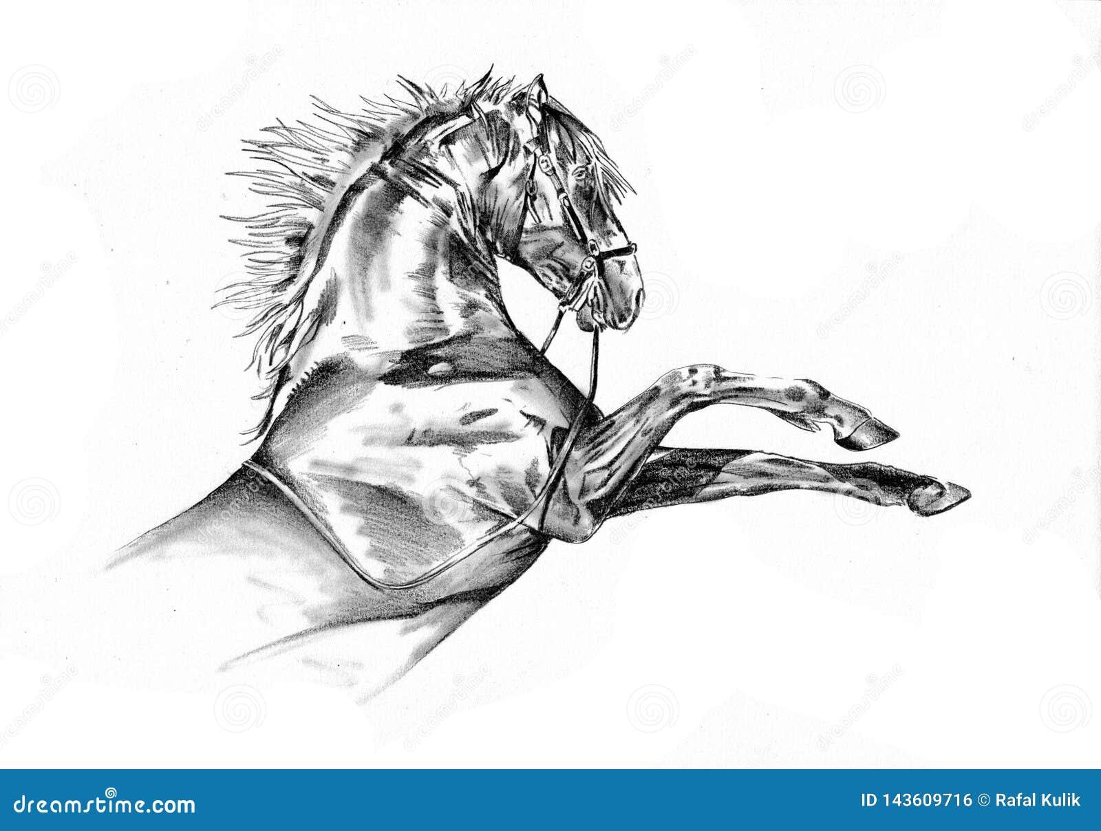Freehand Horse Head Pencil Drawing Stock Illustration Illustration Of Monochrome Mammal 143609716