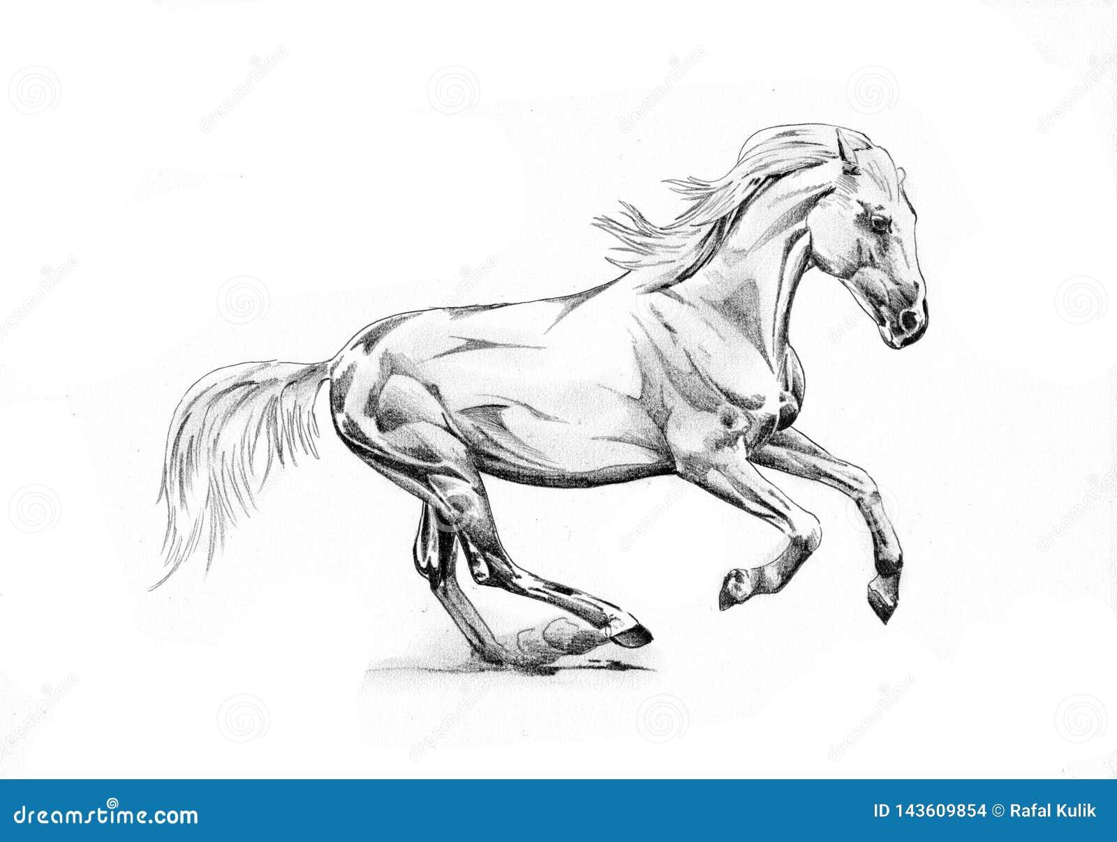 Freehand Horse Head Pencil Drawing Stock Illustration Illustration Of Mane Monochrome 143609854