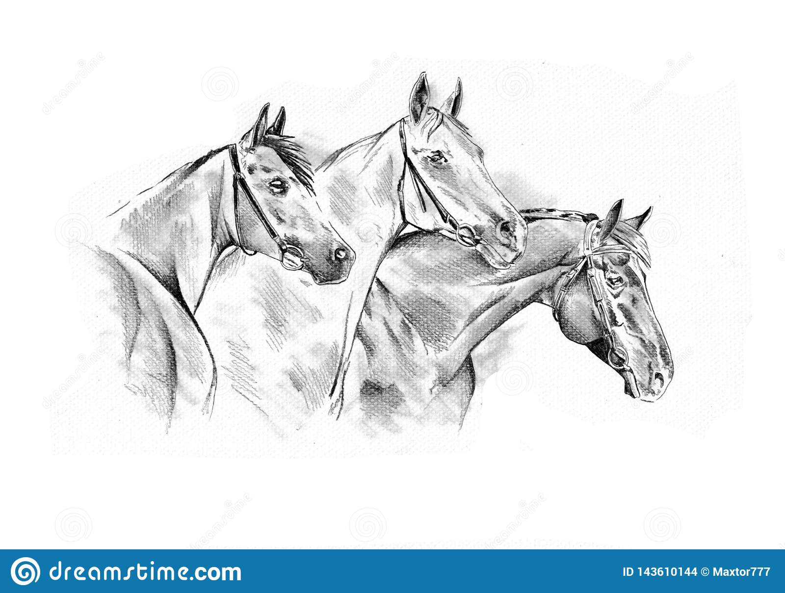 Freehand Horse Head Pencil Drawing Stock Illustration Illustration Of Background Farm 143610144