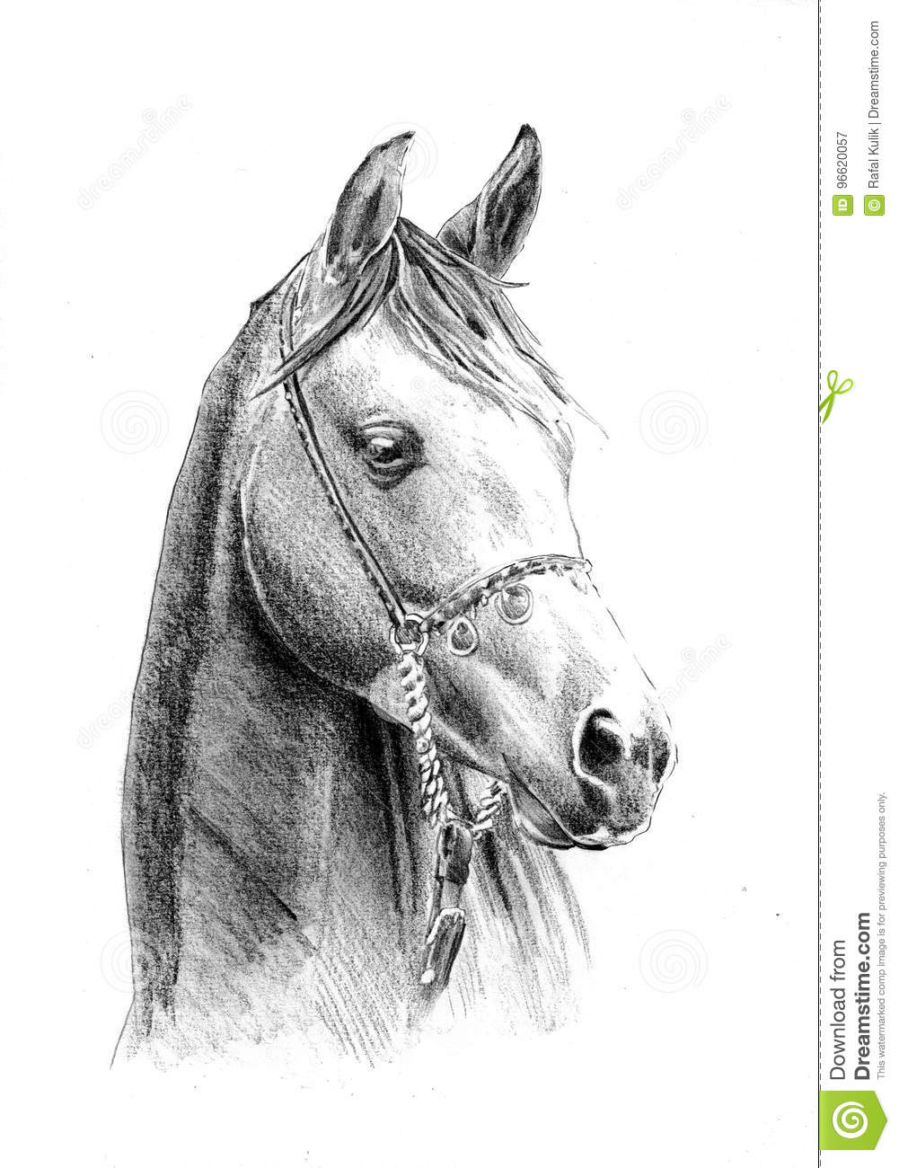 A very good freehand horse head pencil drawing