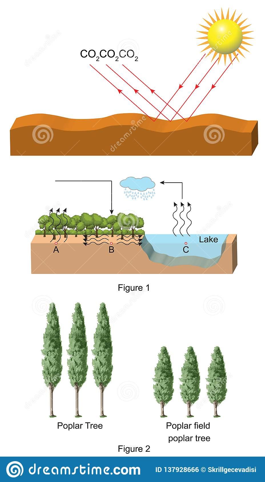 Physics   Carbon Cycle And Tree Species Stock Illustration ...