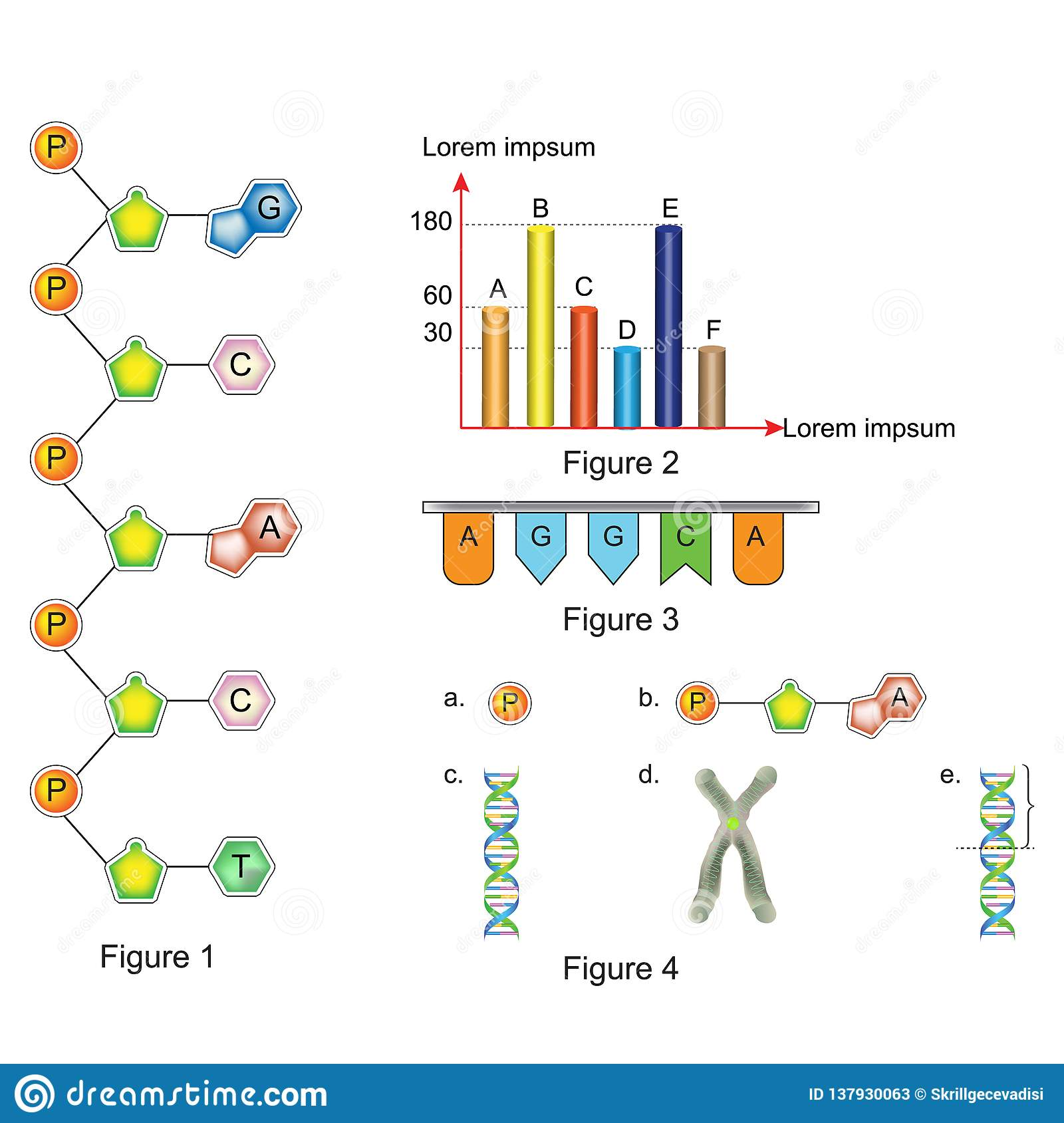 Biology - Question And Answer Template Stock Illustration ...