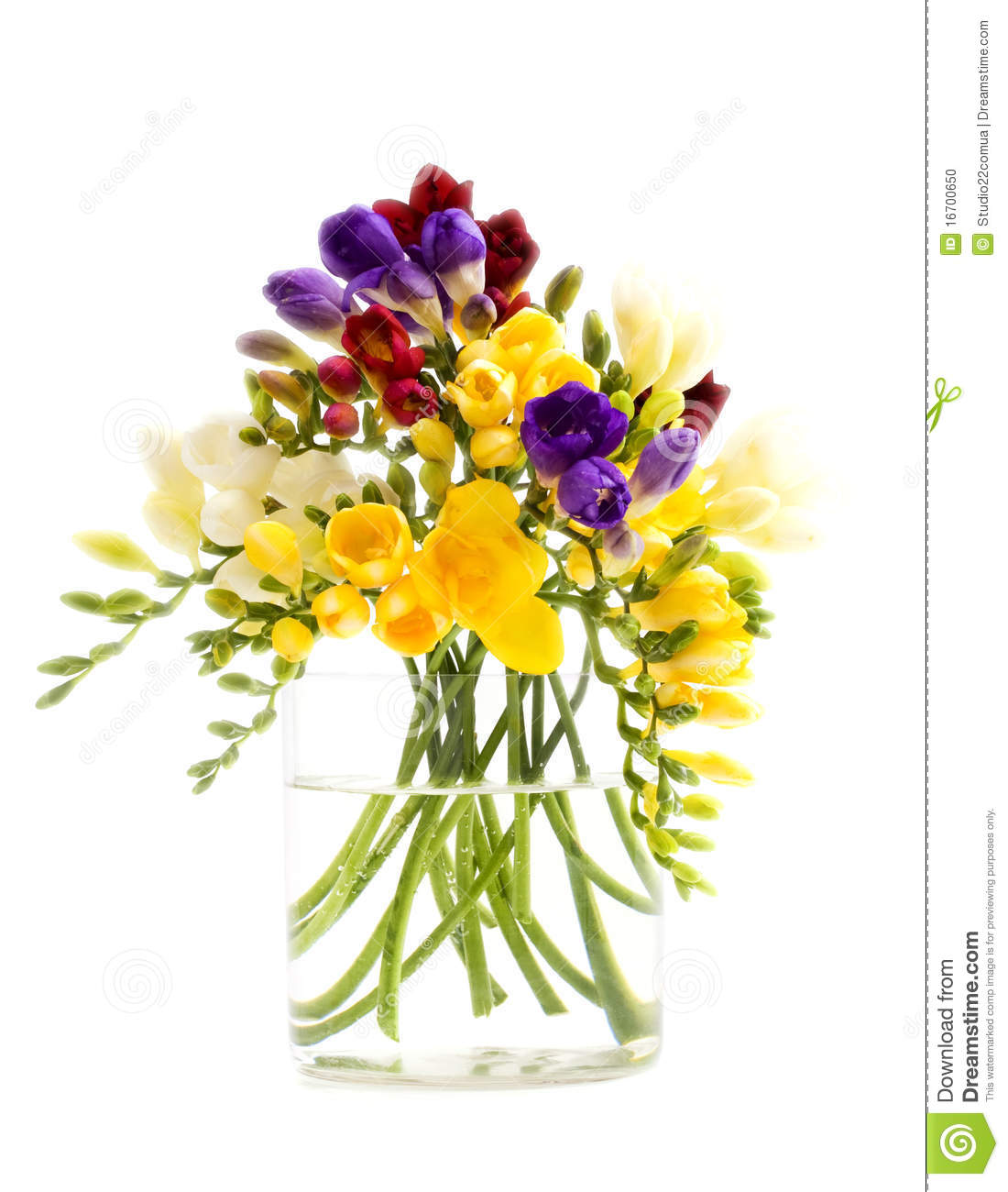 Freesia Flowers Stock Photo Image 16700650