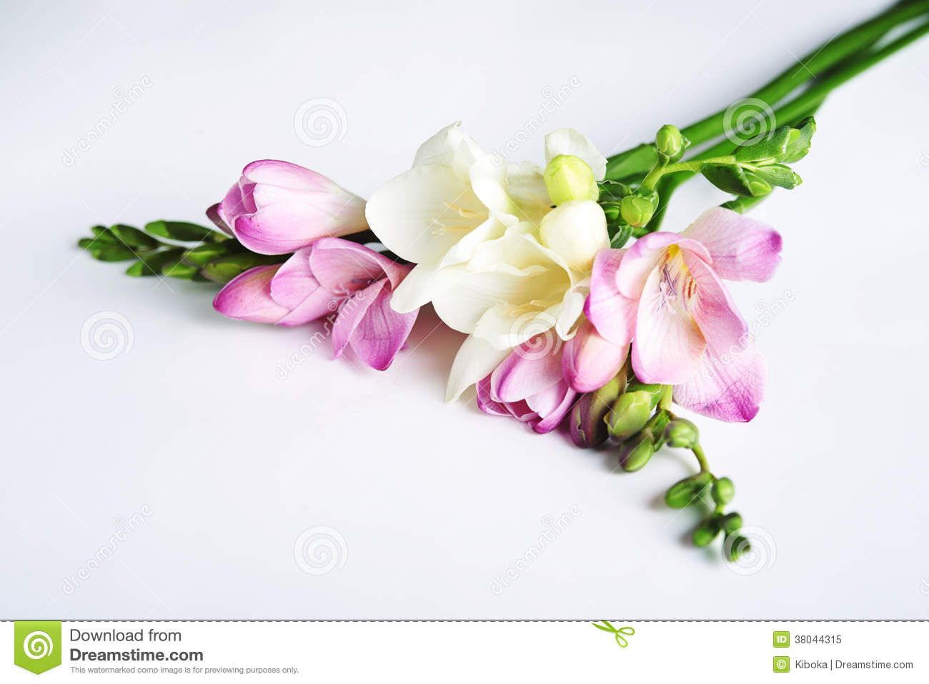 Freesia flowers stock image image of petal pastel flora 38044315 freesia flowers izmirmasajfo