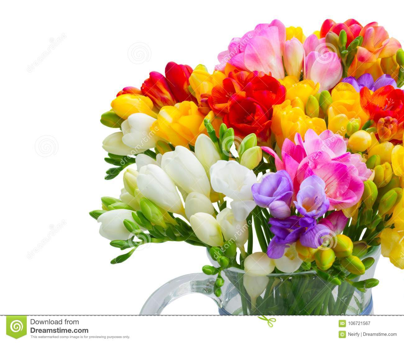 Freesia flowers on white stock image image of natural 106721567 freesia flowers on white izmirmasajfo