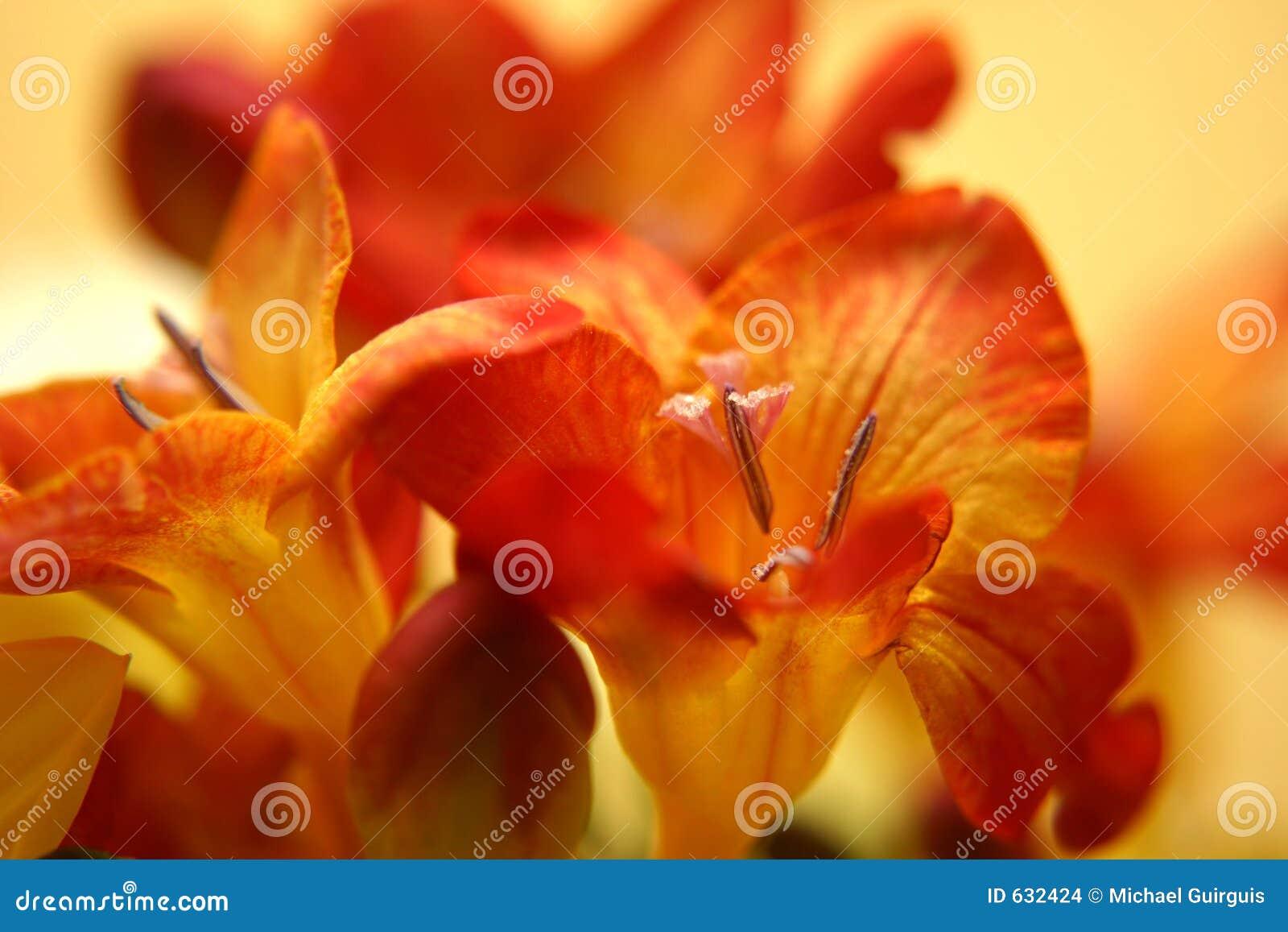 Download Freesias красные стоковое фото. изображение насчитывающей florist - 632424