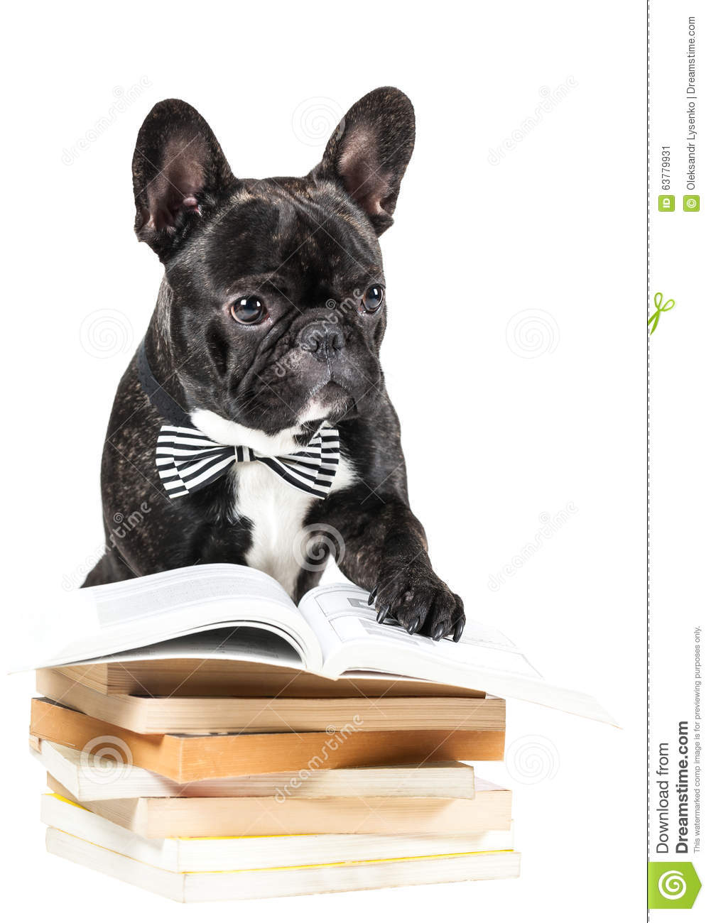 french bulldog book french bulldog with books stock photo image 63779931 8464