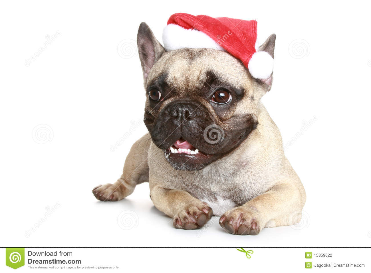 French Bulldog In A Christmas Hat Stock Photography - Image: 15859622