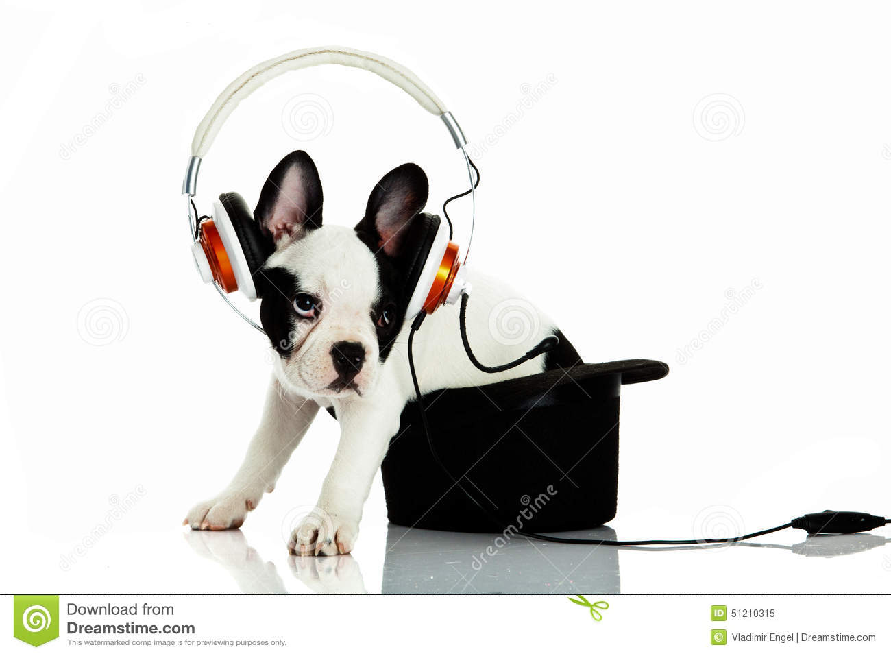 french bulldog with headphone isolated on white background french bulldog clip art pic french bulldog clipart free
