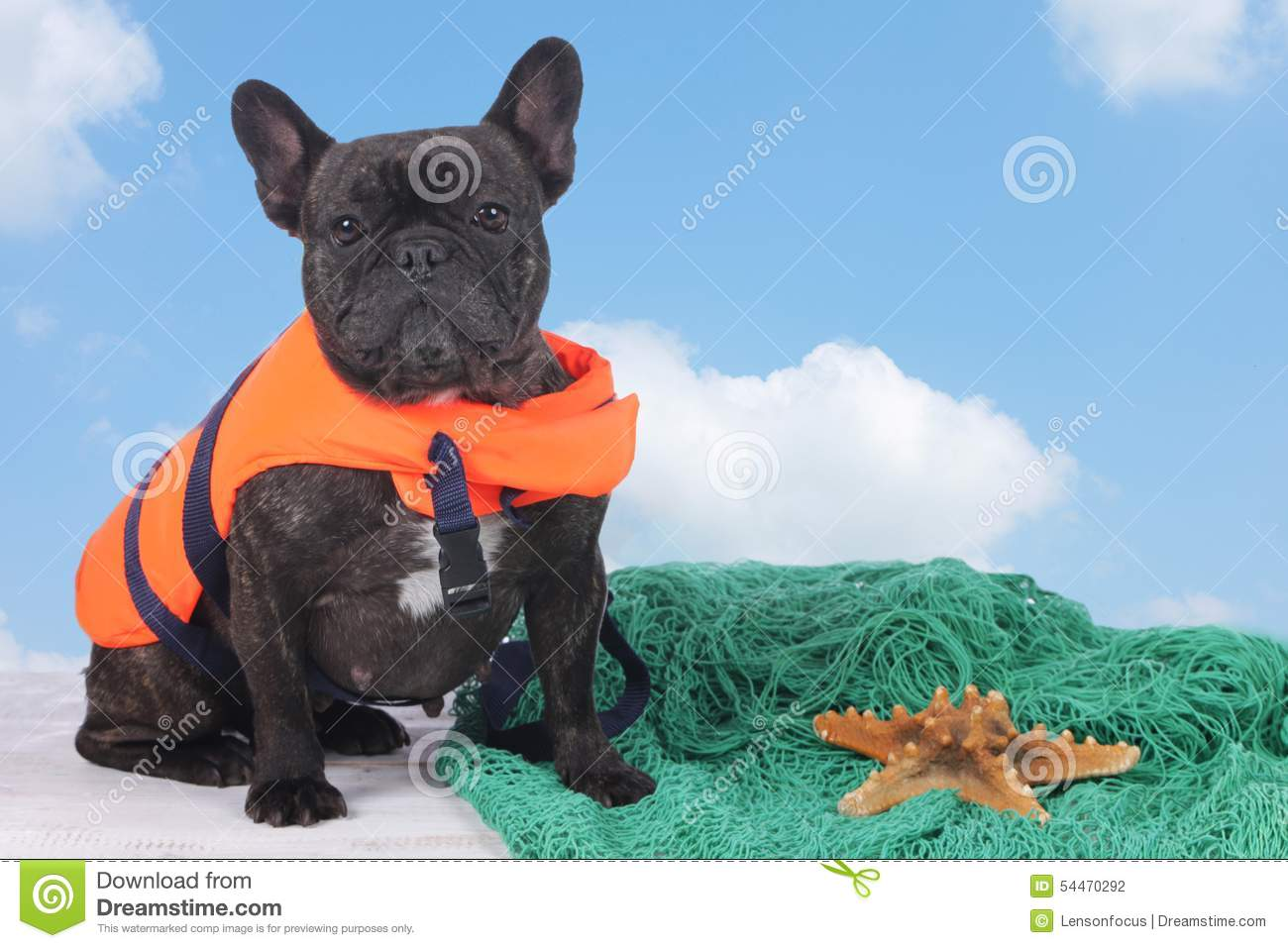 65c008dc45a08c French Bulldog Holidays Stock Images - Download 237 Royalty Free Photos