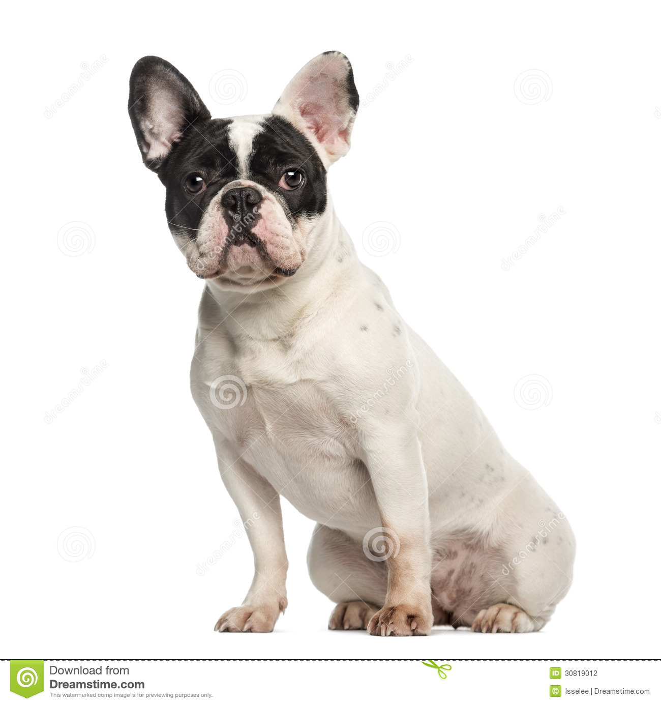 French Bulldog, 10 Months Old, Sitting And Facing Stock Photography ...
