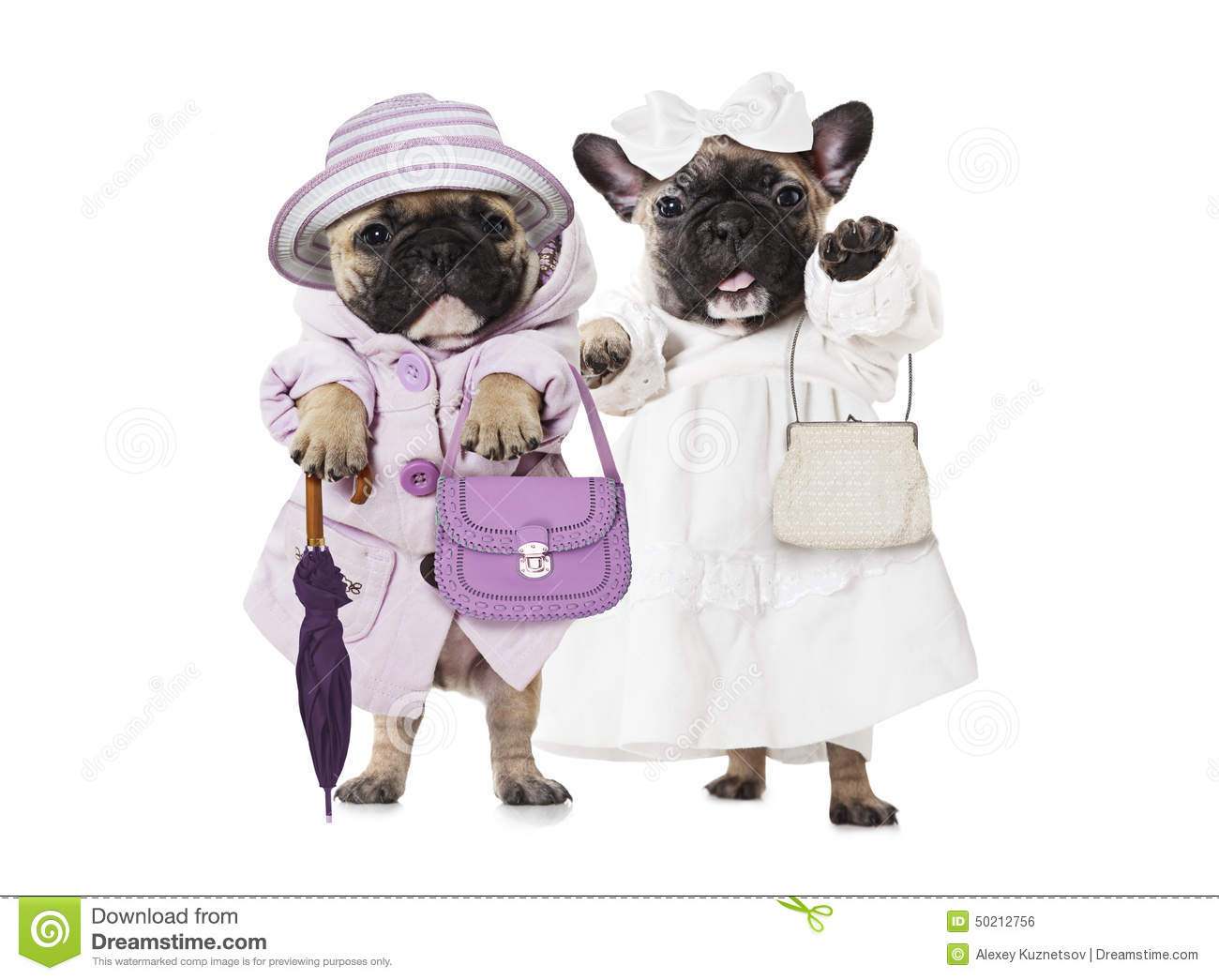 French Bulldog Puppies Dressed As A Dolls With Hand Bags Stock Photo Image Of Pretty Pose 50212756