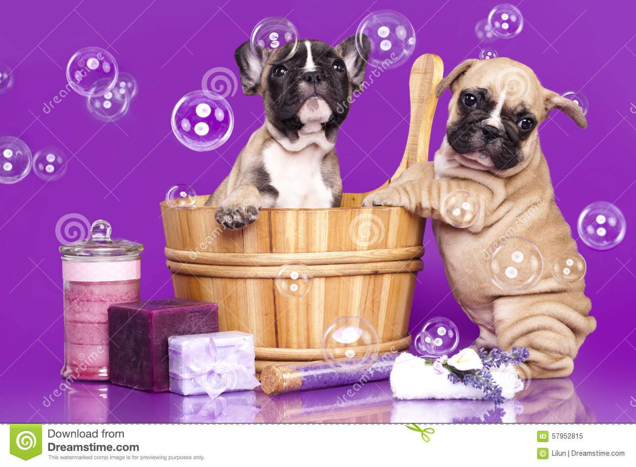 French bulldog puppies and soap bubble