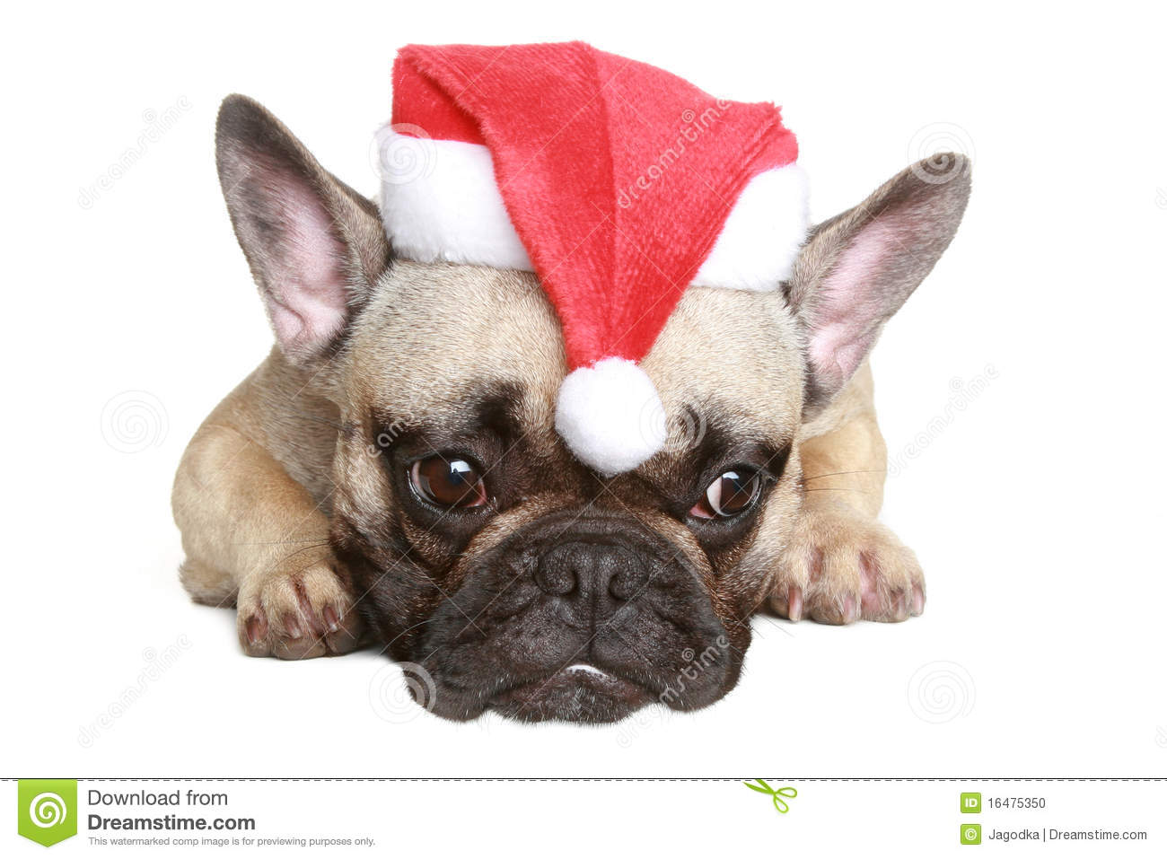 funny christmas bulldog - photo #32