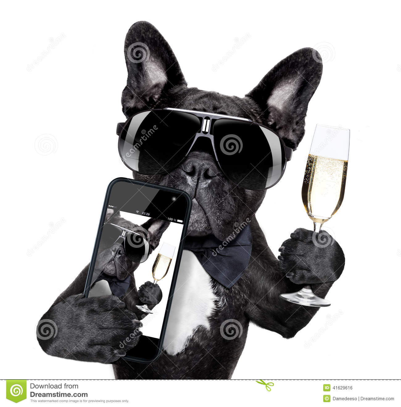 French bulldog selfie stock photo image of party for Geburtstagsbilder 18